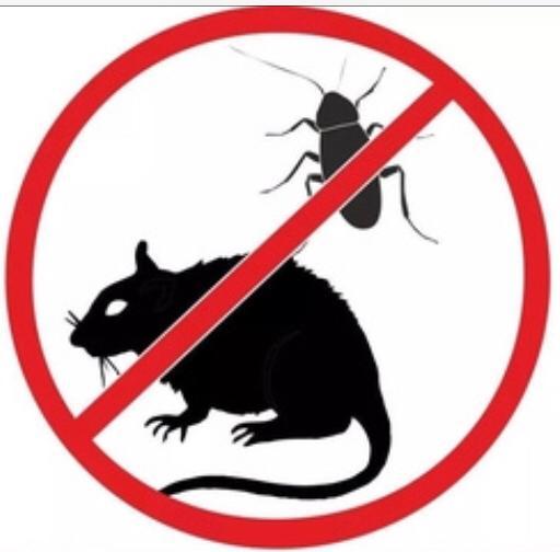 Очистка помещений от насекомых и запаха